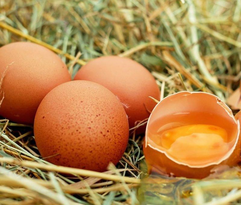 el huevo